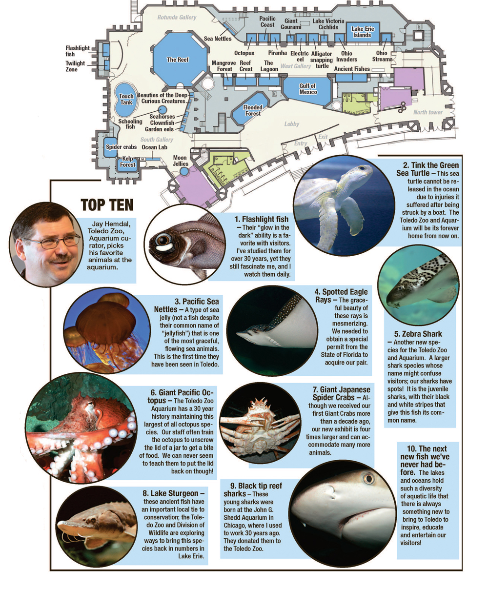 new aquarium at the toledo zoo sea ing is believing the blade after 25 million and 2frac12 years of renovation the zoo opens its latest exhibit friday morning and it wants you to know this isn t your father s or even