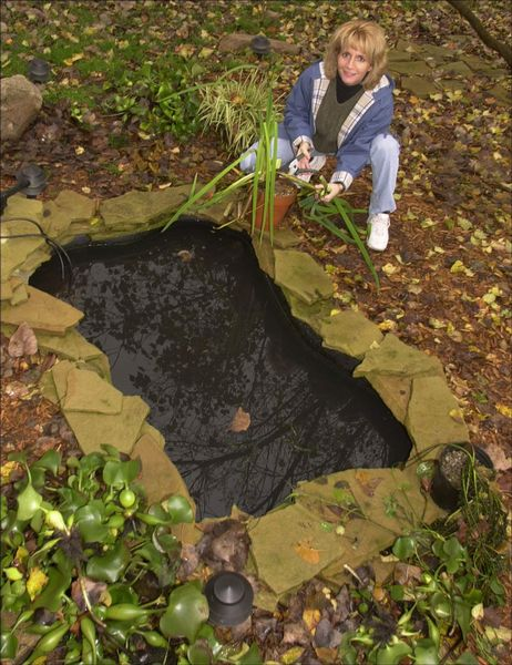 Put backyard pond to bed for winter the blade for Pond plants that survive winter