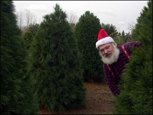 Wilford Salsberry, peering out from his Christmas tree farm near Delta, says older women are most resistant to live trees.