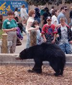 CTY-SLOTH-BEAR-1