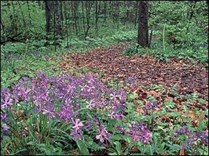 Wildflowers are plentiful along the miles of hiking trails in the park.