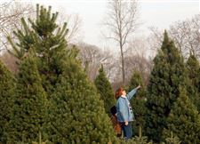 Tree-growers-pine-for-good-year