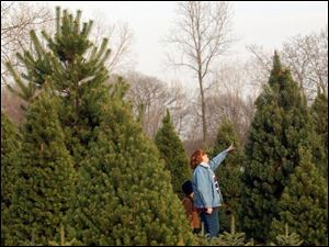 Betsy Hasselbach looks at Christmas trees with her son Roy, 7, at Miller's Nursery in Fremont.