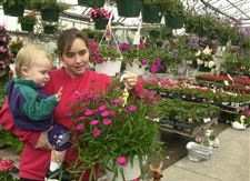 Area-greenhouses-growers-report-retail-sales-of-plants-are-drooping