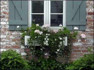 A windowbox overflows with greenery at the historic residence of Sue and Jim White, Jr.