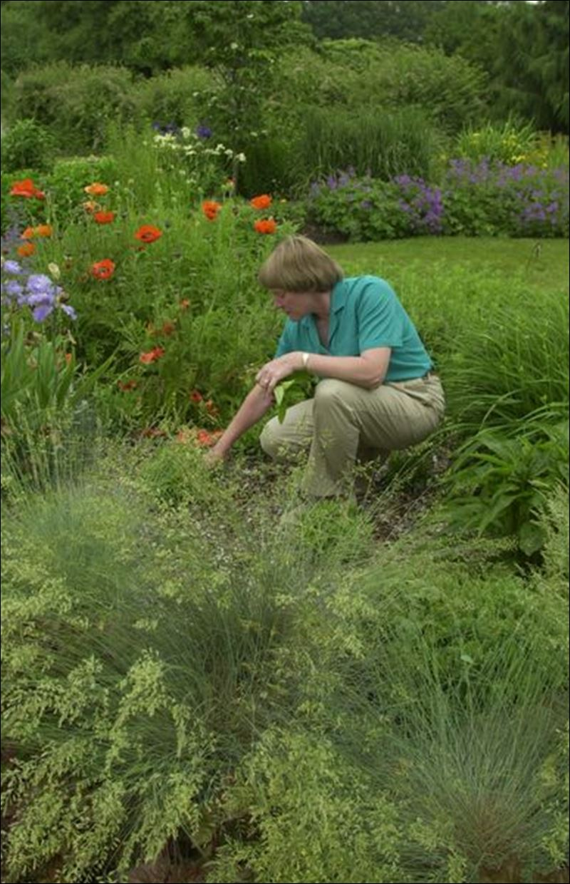 Grasses and annuals bolster perennial beds toledo blade for Grasses for flower beds