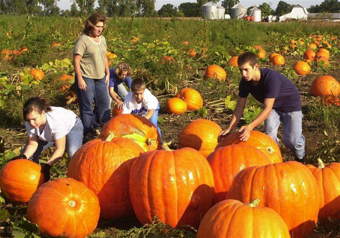 Ohio pumpkin patches, corn mazes, hayrides and more find.