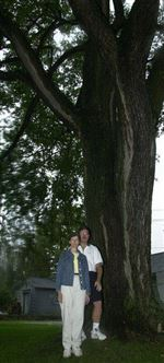 Maumee-couple-seek-to-protect-historic-elm