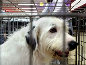 Camille Isaacs takes a look at the selection of animals available at the shelter.