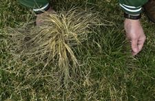 Keep-crabgrass-at-bay-with-preventive-steps