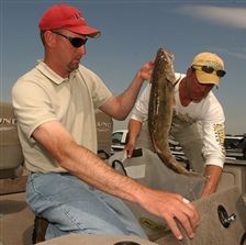 Walleye-anglers-are-hooked-on-Lake-Erie-2