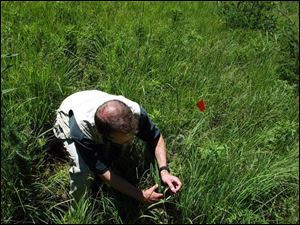 Doug Pearsall of the Nature Conservancy's Michigan chapter studies the vegetation at the Grand River Fen.