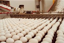Citizens-efforts-scramble-Ohio-s-mega-egg-farm