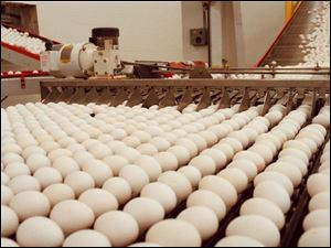 Eggs delivered from the hens by conveyor belts are lined up to be cleaned and probed for defects at the Buckeye Egg Farm.