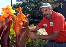 Raising-cannas-can-add-big-bursts-of-color
