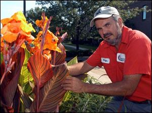 Wayne Strayer with some of the cannas growing at Owens Community College.