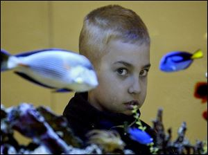 ROV January 28, 2004 - Andrew McCray, 9, a third grader at St. Agnes school, took advantage of a weather related day-off from school by visiting the downtown Toledo-Lucas County Public Library where he checked out the aquarium in the children's library.  Blade photo by Dave Zapotosky