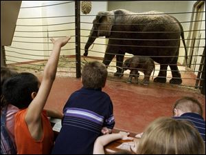 Youngsters get their first look at Louie, the elephant born at the Toledo Zoo, with his mother, Renee, shortly after his birth last year. Louie has been a popular attraction at the zoo, which is involved in an ongoing expansion plan.