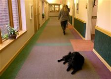 Hospice-says-good-bye-to-its-canine-caregiver