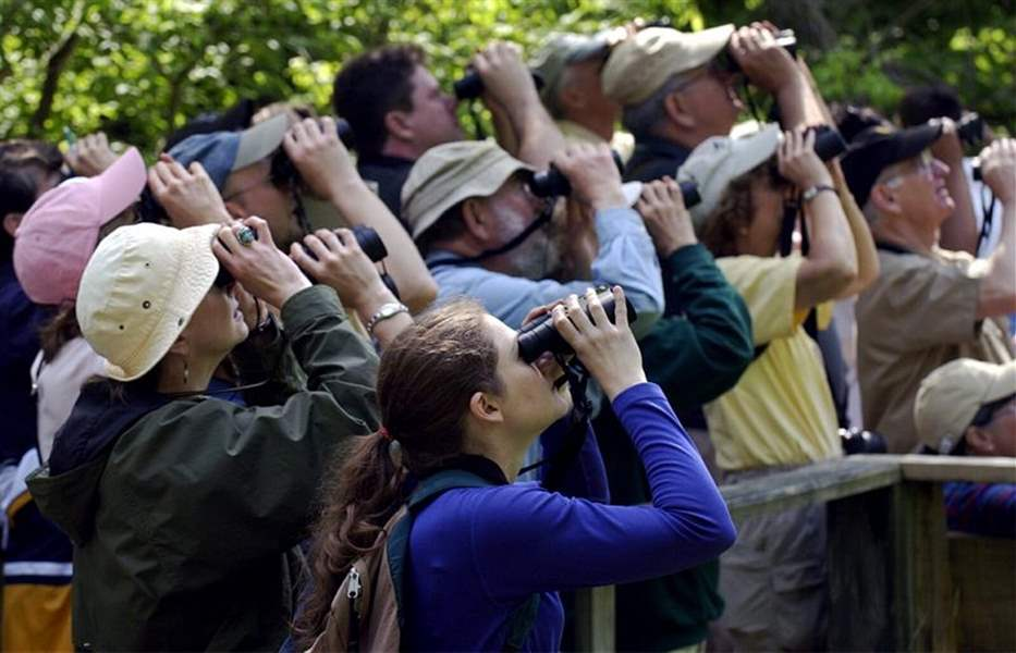 BIRDERS-OF-A-FEATHER-FLOCK-TO-MAGEE-MARSH