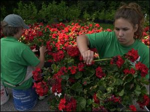 NBR CORPS01 2 6/29/04 PHOTO BY LORI KING Harry Zeitler, 12, and Hailey Keyees, 13, members of the Sylvania Youth Conservation Corps, dead head geraniums during an outing at Harroun CoPark.