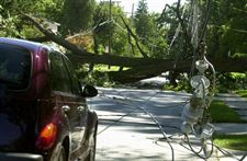 Oak-tree-topples-onto-vehicle-cuts-power-lines
