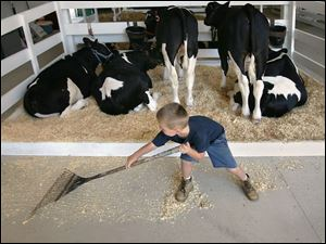 Garrett Schneider, 4, rakes up some of the sawdust in the cattle barn at the county fair.