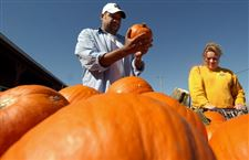 Jack-o-lantern-pumpkin-prices-near-last-year-s-at-area-growers