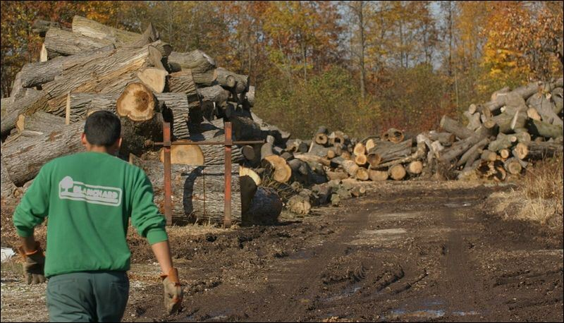 Ash borer eats into wood supply for area residents