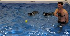 Acupuncture-to-swimming-Veterinarians-therapies-vary