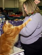 Cat-fanciers-aspire-for-purrfection-at-area-show