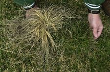 Spring-is-time-to-conquer-crabgrass