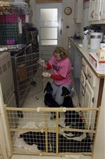 Monroe-County-Humane-Society-seeks-more-funds-2