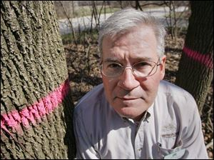 Pink rings painted on doomed ash trees flank John Jaeger, natural resources manager at Pearson Metropark. Ash trees are threatened by the emerald ash borer.
