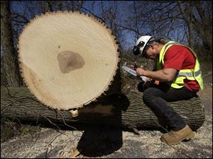 Leonard Carl stops his work to sharpen his chain saw during removal of a 53-year-old green ash at Pearson Metropark.