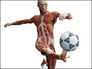 A soccer player is one of  the 20 dynamically posed cadavers on display at the  Body Worlds 2  exhibit at the Great Lakes Science