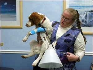 Heidi Sitzenstock of Maumee takes her dog, Puddin'head Joe, home after the dog got stitches.
