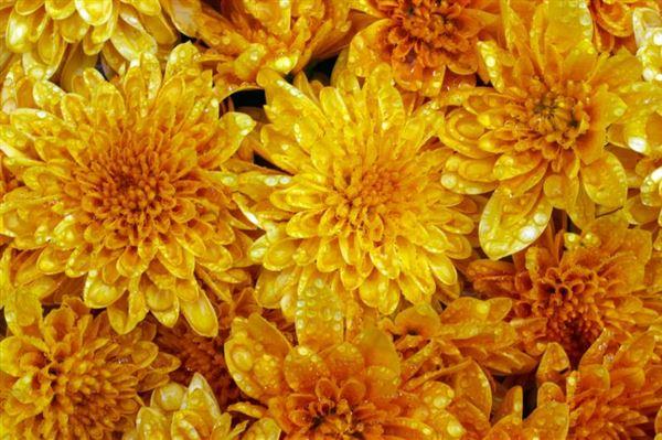 El Año de las Flores - Calyx Flowers, Inc