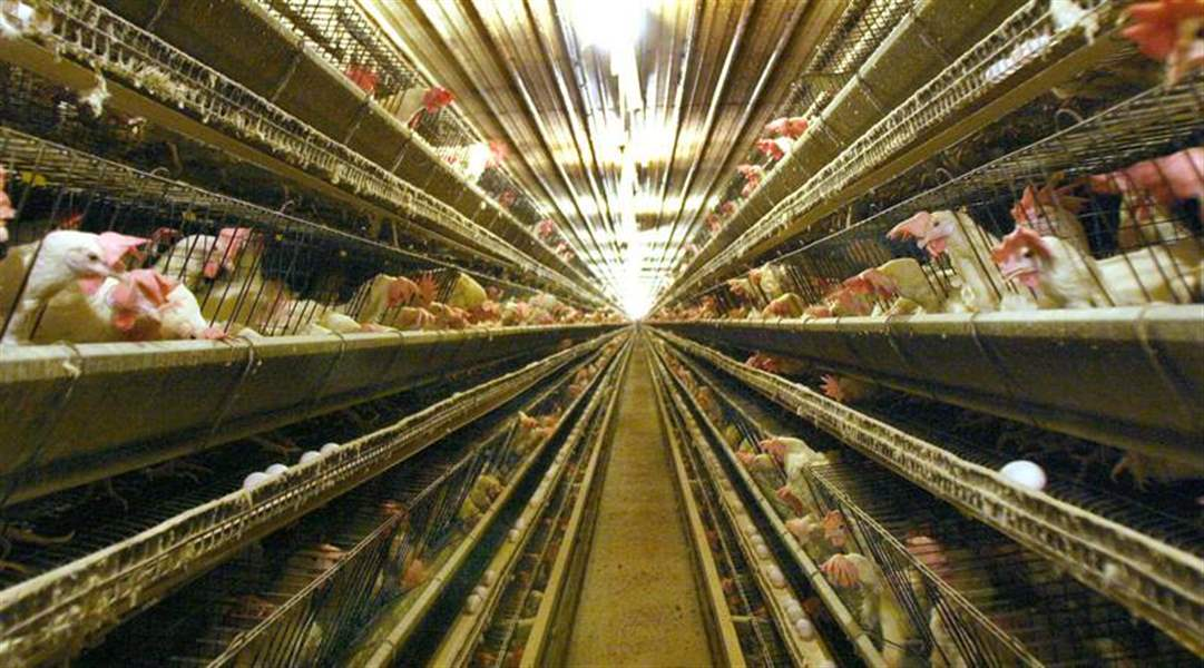 State-moving-to-shut-down-Ohio-Fresh-Eggs-operations
