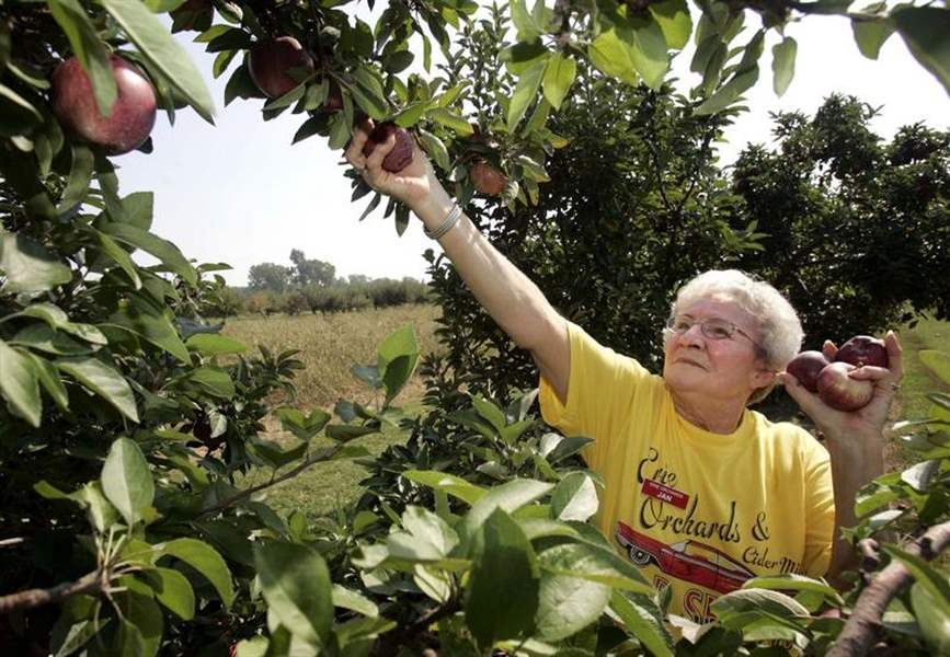 Area-apple-crop-ample-sweet-at-prices-slightly-above-last-year-s