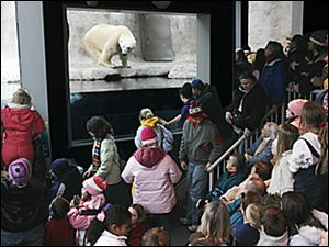 "Slug: ROV zoo07p                     Date:   1/7/2006 The Blade/Amy E. Voigt       Location: Toledo Zoo, Toledo, OH   Caption: A group of people swarm into the Arctic Encounter area of teh Toledo Zoo to watch ""Marty"" the polar bear at feeding time as a part"