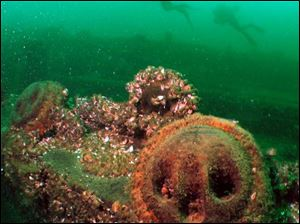 Scuba divers pass the ruins of the George A. Marsh, one of the shipwrecks that attract tourists to Kingston, Ont.
