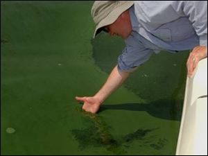 University of Toledo professor Tom Bridgeman checks algae in