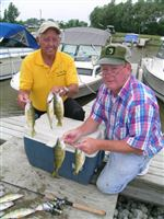 Lake-Erie-yellow-perch-haven-t-gone-with-the-wind-2