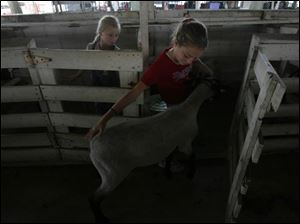 Alexis Circle, 10, left, watches her sister Bridget, 12, lead her lamb into its pen at the Fulton County Fairgrounds. The girls are both 4-H members who will participate in the fair.