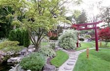 New-look-for-Paradise-Japanese-garden-area-is-transformed