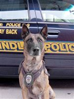 Findlay-mourns-loss-of-police-dog-rejoices-in-Steeler-s-gift-to-replace-it-3