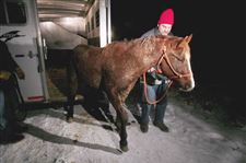 Horse-dealer-OKs-removal-of-11-animals-to-rescue-site