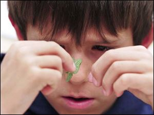 Toth Elementary student Michael Covyaw studies a micro vegtable grown by a Huron, Ohio greenhouse.