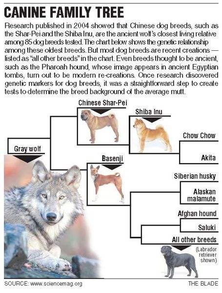 DNA-pinpoints-pooch-pedigrees-2